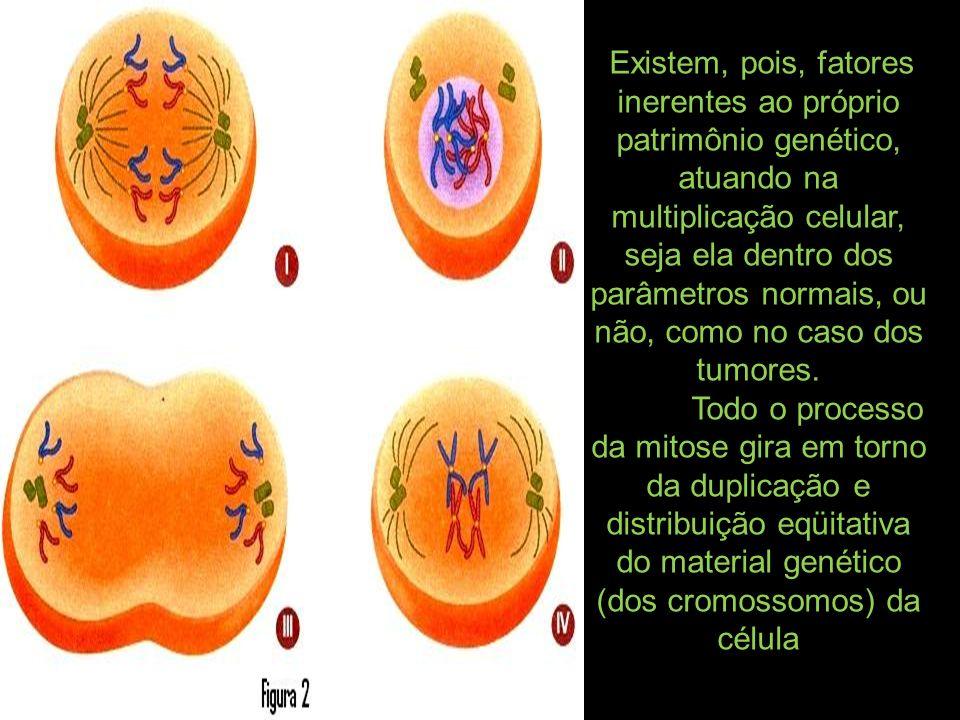 Existem, pois, fatores inerentes ao próprio patrimônio genético, atuando na multiplicação celular, seja ela dentro dos parâmetros normais, ou não, como no caso dos tumores.
