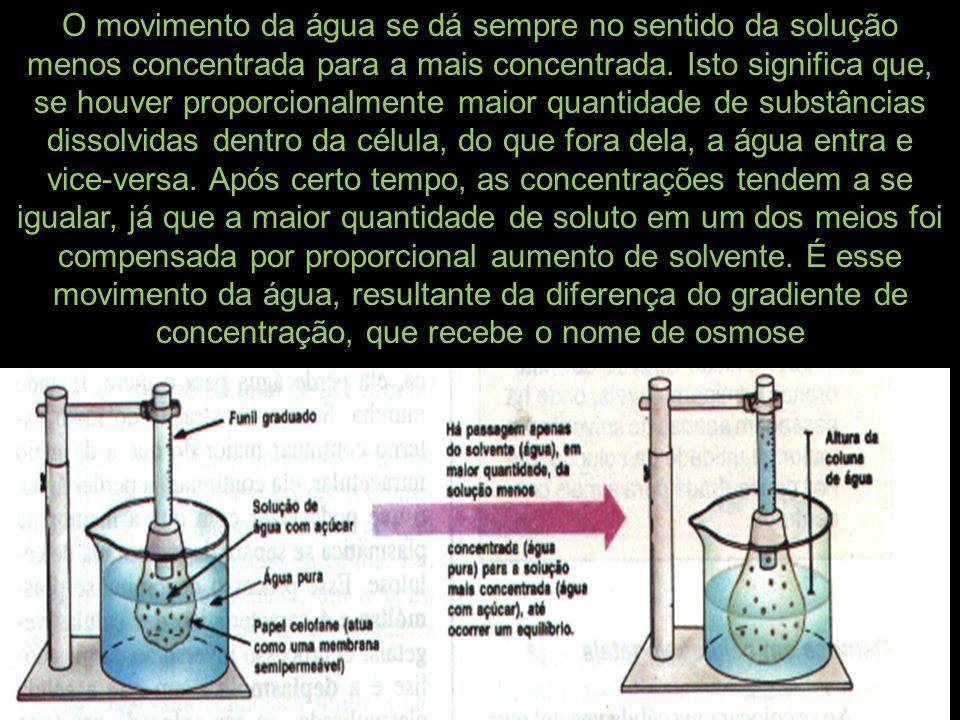 O movimento da água se dá sempre no sentido da solução menos concentrada para a mais concentrada.