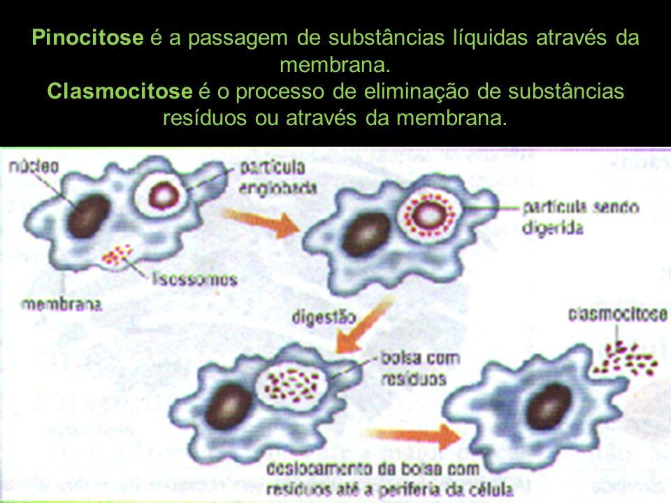 Pinocitose é a passagem de substâncias líquidas através da membrana.