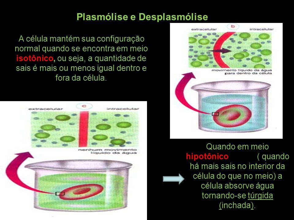 Plasmólise e Desplasmólise