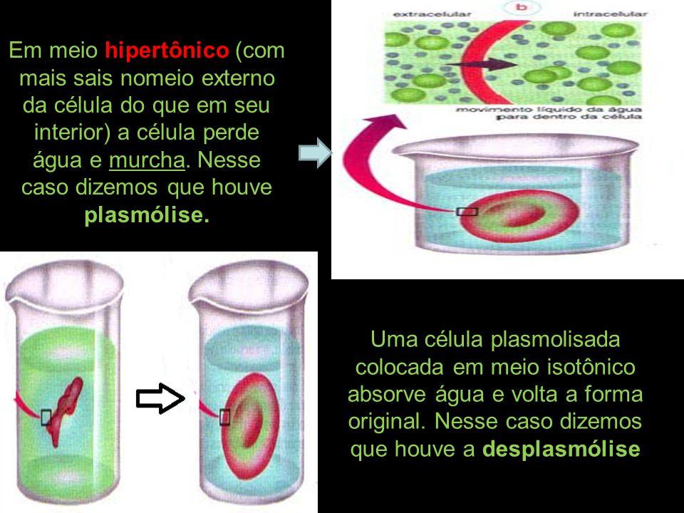 Em meio hipertônico (com mais sais nomeio externo da célula do que em seu interior) a célula perde água e murcha. Nesse caso dizemos que houve plasmólise.