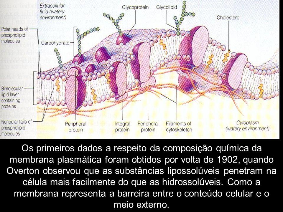 Os primeiros dados a respeito da composição química da membrana plasmática foram obtidos por volta de 1902, quando Overton observou que as substâncias lipossolúveis penetram na célula mais facilmente do que as hidrossolúveis.