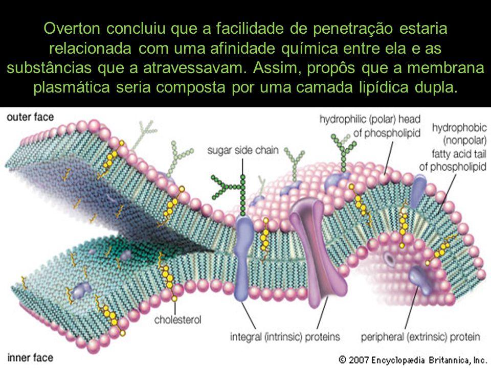 Overton concluiu que a facilidade de penetração estaria relacionada com uma afinidade química entre ela e as substâncias que a atravessavam.