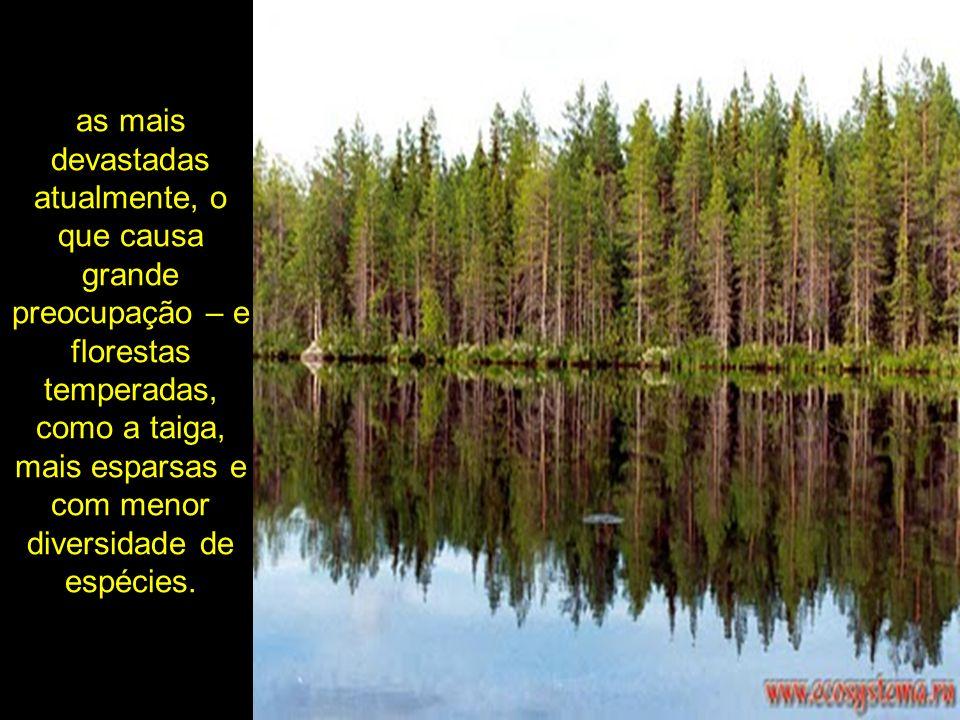 as mais devastadas atualmente, o que causa grande preocupação – e florestas temperadas, como a taiga, mais esparsas e com menor diversidade de espécies.