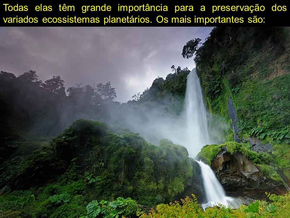 Todas elas têm grande importância para a preservação dos variados ecossistemas planetários.