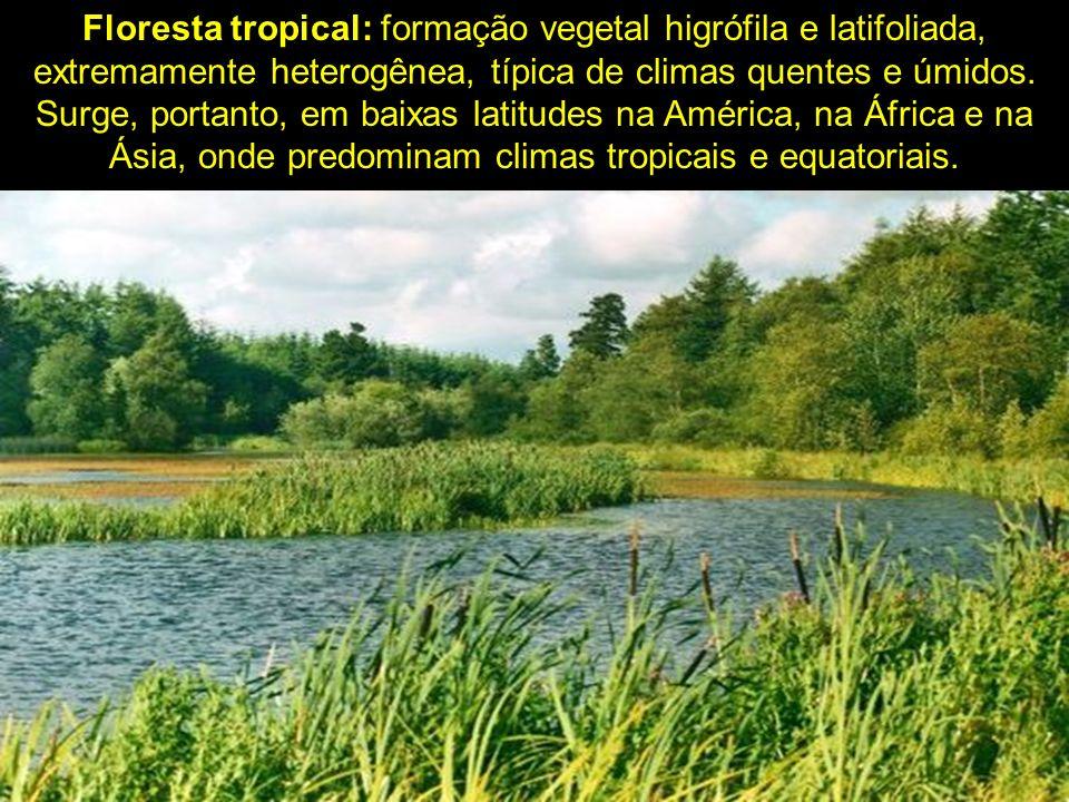 Floresta tropical: formação vegetal higrófila e latifoliada, extremamente heterogênea, típica de climas quentes e úmidos.