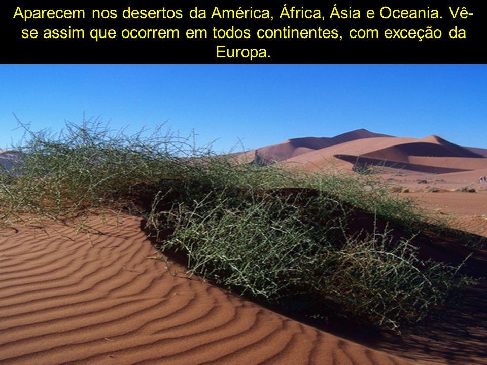 Aparecem nos desertos da América, África, Ásia e Oceania