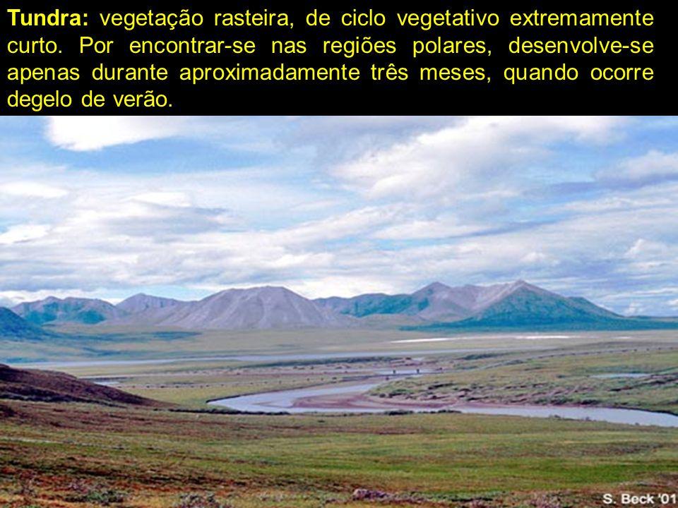 Tundra: vegetação rasteira, de ciclo vegetativo extremamente curto