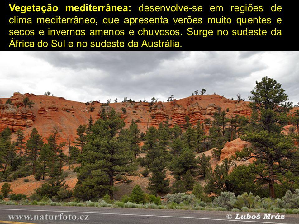 Vegetação mediterrânea: desenvolve-se em regiões de clima mediterrâneo, que apresenta verões muito quentes e secos e invernos amenos e chuvosos.
