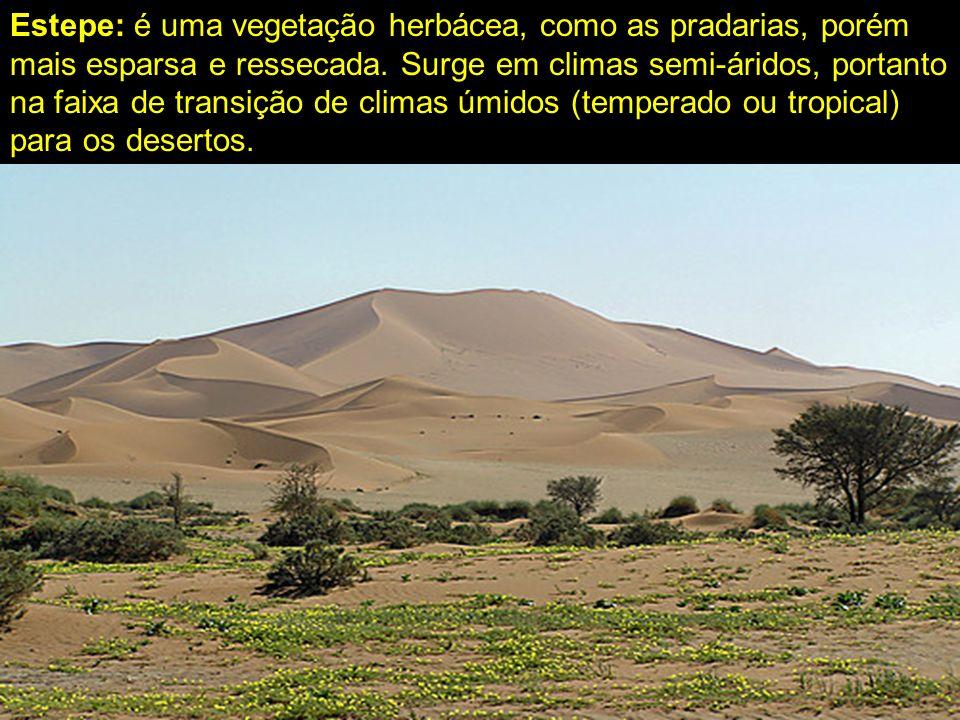 Estepe: é uma vegetação herbácea, como as pradarias, porém mais esparsa e ressecada.