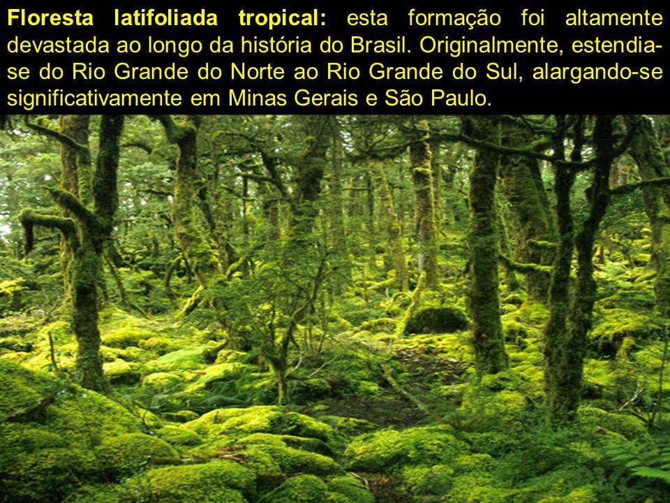 Floresta latifoliada tropical: esta formação foi altamente devastada ao longo da história do Brasil.