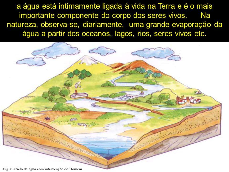 a água está intimamente ligada à vida na Terra e é o mais importante componente do corpo dos seres vivos.