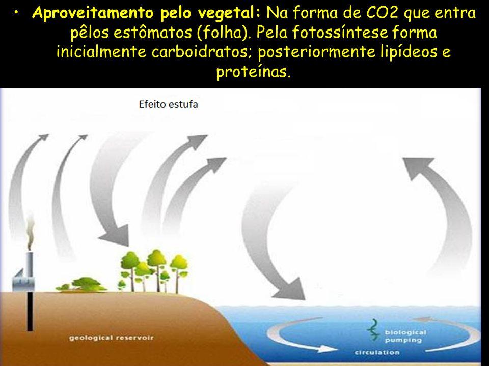 Aproveitamento pelo vegetal: Na forma de CO2 que entra pêlos estômatos (folha).