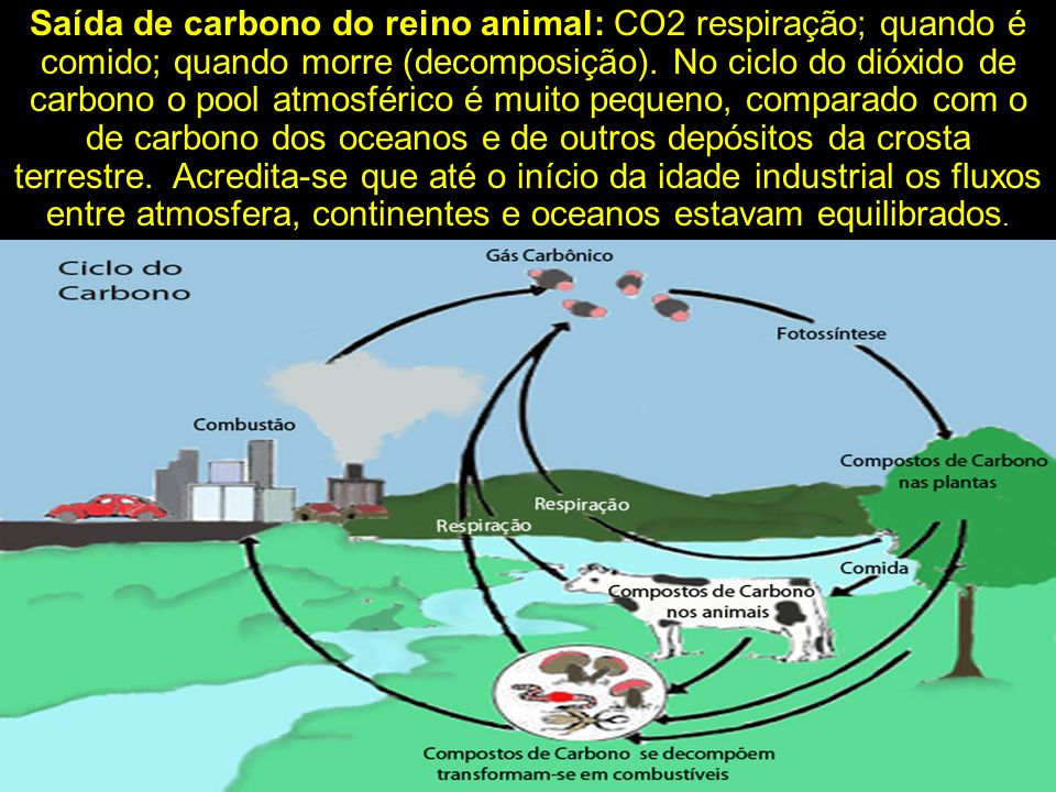 Saída de carbono do reino animal: CO2 respiração; quando é comido; quando morre (decomposição).