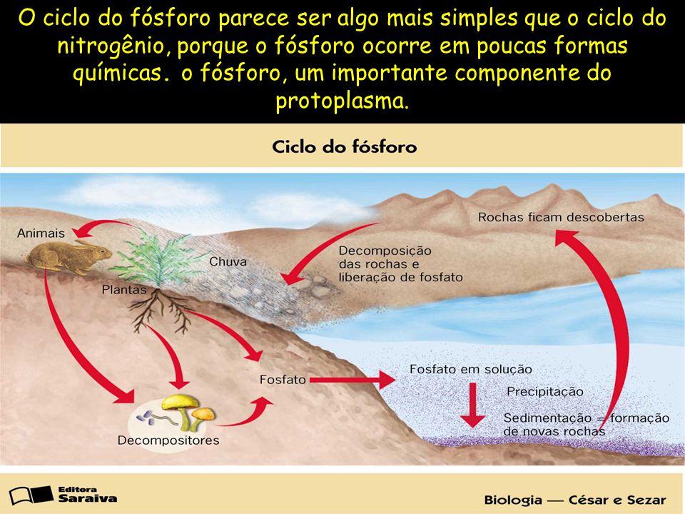 O ciclo do fósforo parece ser algo mais simples que o ciclo do nitrogênio, porque o fósforo ocorre em poucas formas químicas.