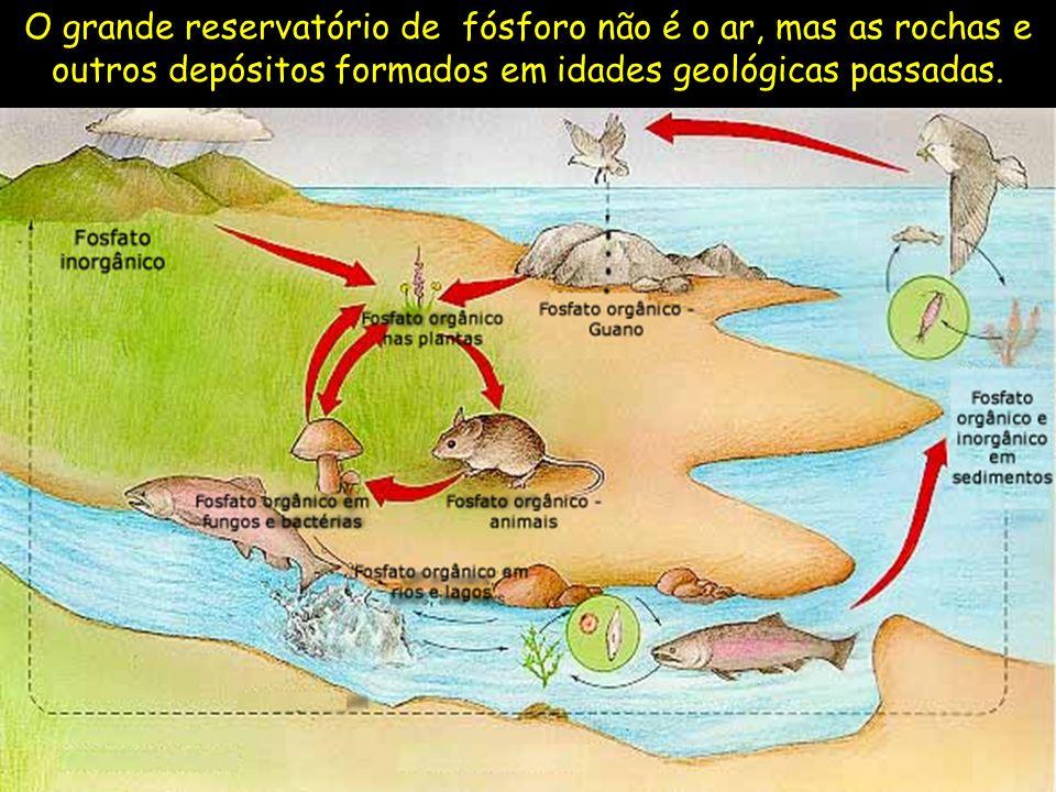 O grande reservatório de fósforo não é o ar, mas as rochas e outros depósitos formados em idades geológicas passadas.