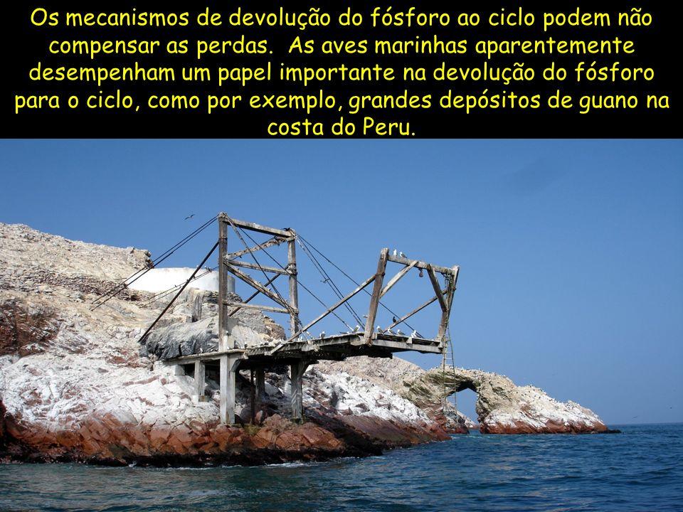 Os mecanismos de devolução do fósforo ao ciclo podem não compensar as perdas.