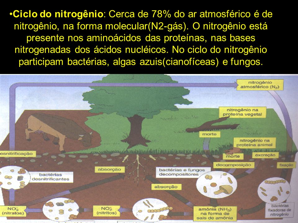 Ciclo do nitrogênio: Cerca de 78% do ar atmosférico é de nitrogênio, na forma molecular(N2-gás).