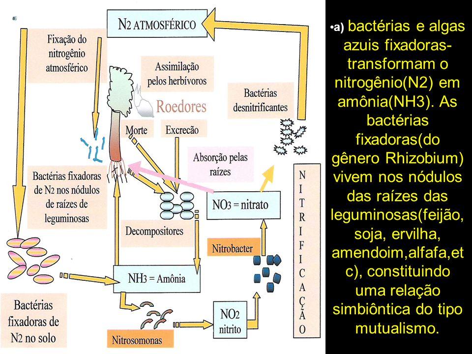 a) bactérias e algas azuis fixadoras- transformam o nitrogênio(N2) em amônia(NH3).