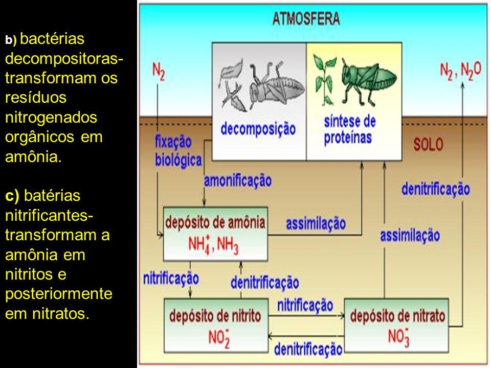 b) bactérias decompositoras- transformam os resíduos nitrogenados orgânicos em amônia.