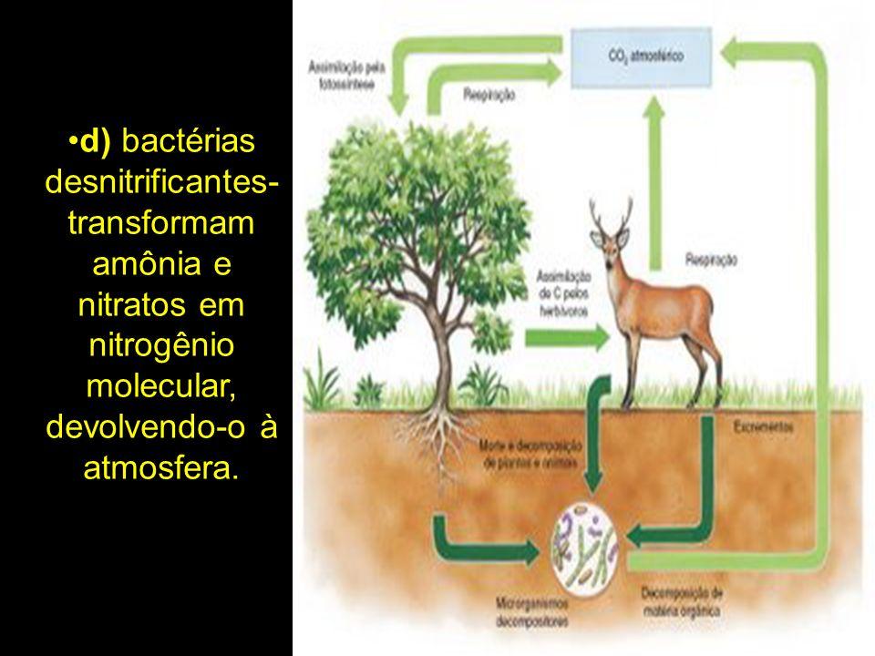 d) bactérias desnitrificantes- transformam amônia e nitratos em nitrogênio molecular, devolvendo-o à atmosfera.
