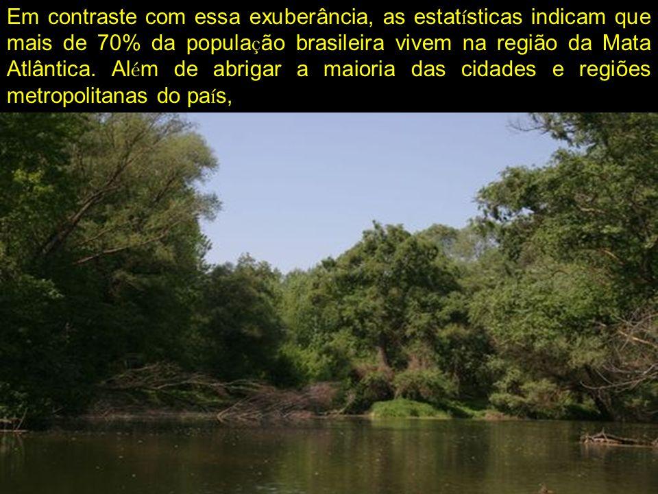 Em contraste com essa exuberância, as estatísticas indicam que mais de 70% da população brasileira vivem na região da Mata Atlântica.