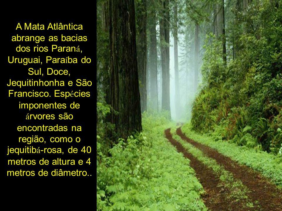 A Mata Atlântica abrange as bacias dos rios Paraná, Uruguai, Paraíba do Sul, Doce, Jequitinhonha e São Francisco. Espécies imponentes de árvores são encontradas na região, como o jequitibá-rosa, de 40 metros de altura e 4 metros de diâmetro..