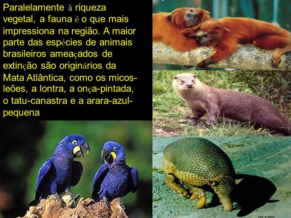 Paralelamente à riqueza vegetal, a fauna é o que mais impressiona na região.
