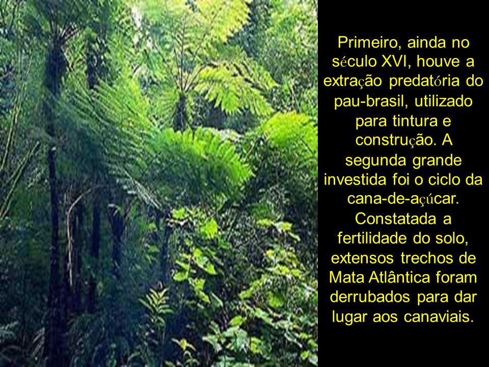 Primeiro, ainda no século XVI, houve a extração predatória do pau-brasil, utilizado para tintura e construção.