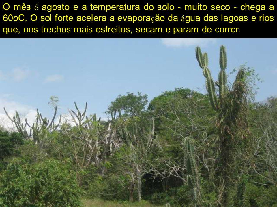 O mês é agosto e a temperatura do solo - muito seco - chega a 60oC