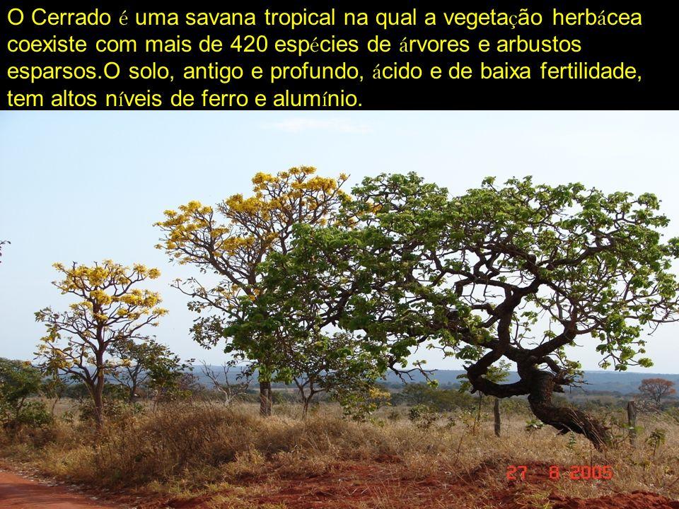 O Cerrado é uma savana tropical na qual a vegetação herbácea coexiste com mais de 420 espécies de árvores e arbustos esparsos.O solo, antigo e profundo, ácido e de baixa fertilidade, tem altos níveis de ferro e alumínio.