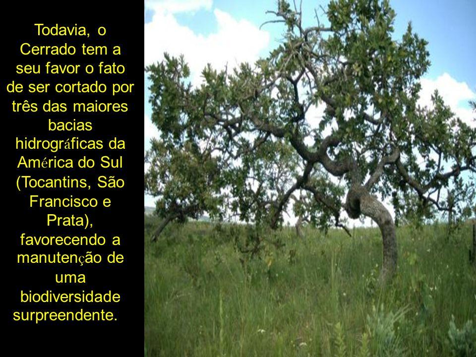 Todavia, o Cerrado tem a seu favor o fato de ser cortado por três das maiores bacias hidrográficas da América do Sul (Tocantins, São Francisco e Prata), favorecendo a manutenção de uma biodiversidade surpreendente.