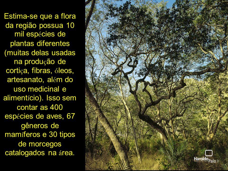 Estima-se que a flora da região possua 10 mil espécies de plantas diferentes (muitas delas usadas na produção de cortiça, fibras, óleos, artesanato, além do uso medicinal e alimentício).