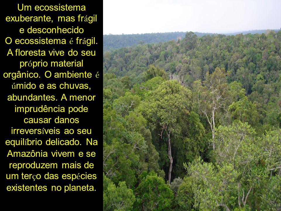 Um ecossistema exuberante, mas frágil e desconhecido O ecossistema é frágil.