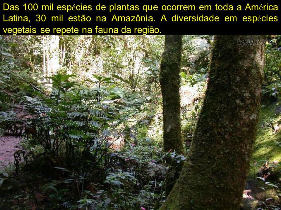 Das 100 mil espécies de plantas que ocorrem em toda a América Latina, 30 mil estão na Amazônia.