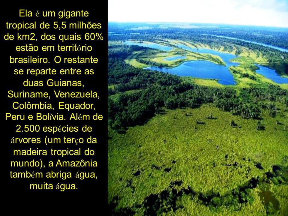Ela é um gigante tropical de 5,5 milhões de km2, dos quais 60% estão em território brasileiro.