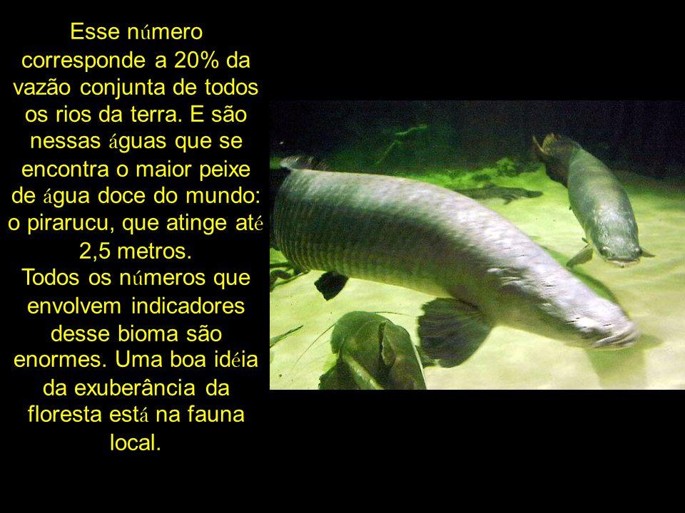 Esse número corresponde a 20% da vazão conjunta de todos os rios da terra.