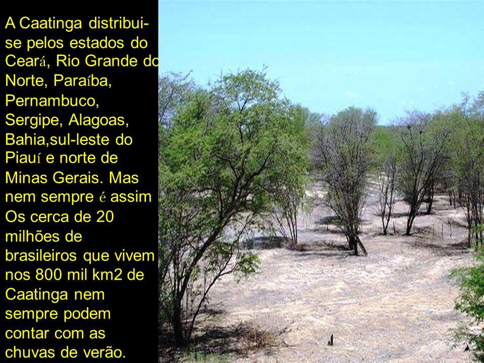 A Caatinga distribui-se pelos estados do Ceará, Rio Grande do Norte, Paraíba, Pernambuco, Sergipe, Alagoas, Bahia,sul-leste do Piauí e norte de Minas Gerais.