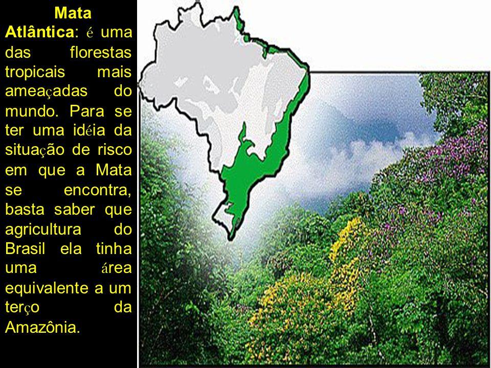 Mata Atlântica: é uma das florestas tropicais mais ameaçadas do mundo