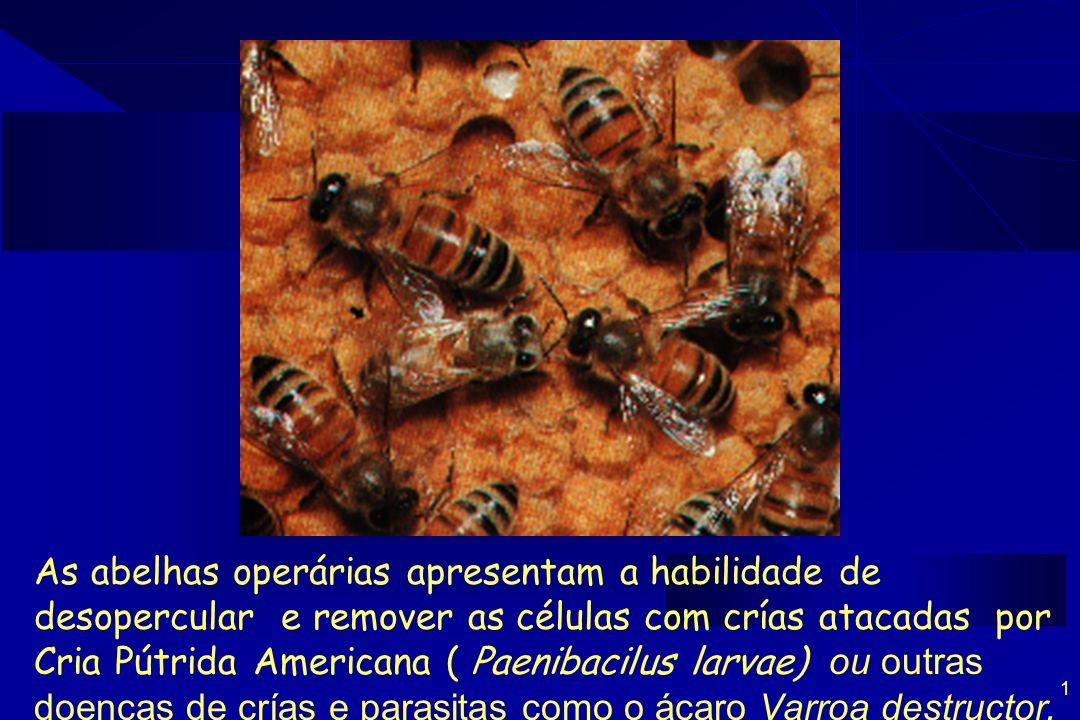 As abelhas operárias apresentam a habilidade de desopercular e remover as células com crías atacadas por Cria Pútrida Americana ( Paenibacilus larvae) ou outras doenças de crías e parasitas como o ácaro Varroa destructor.