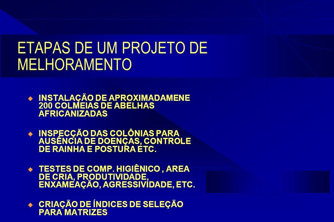 ETAPAS DE UM PROJETO DE MELHORAMENTO