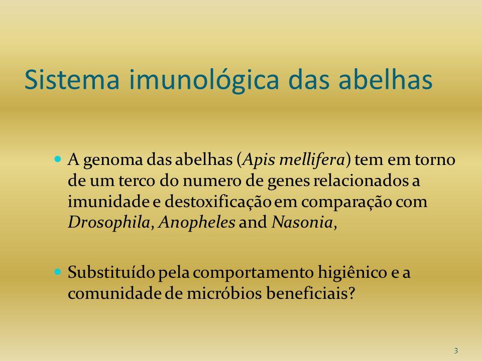 Sistema imunológica das abelhas