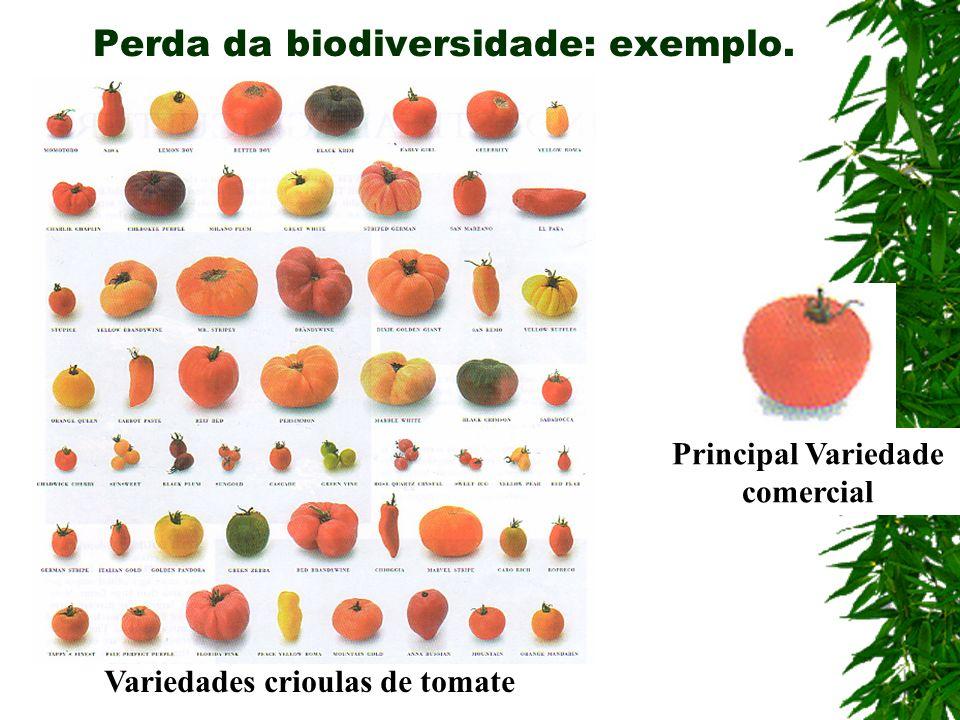 Perda da biodiversidade: exemplo.