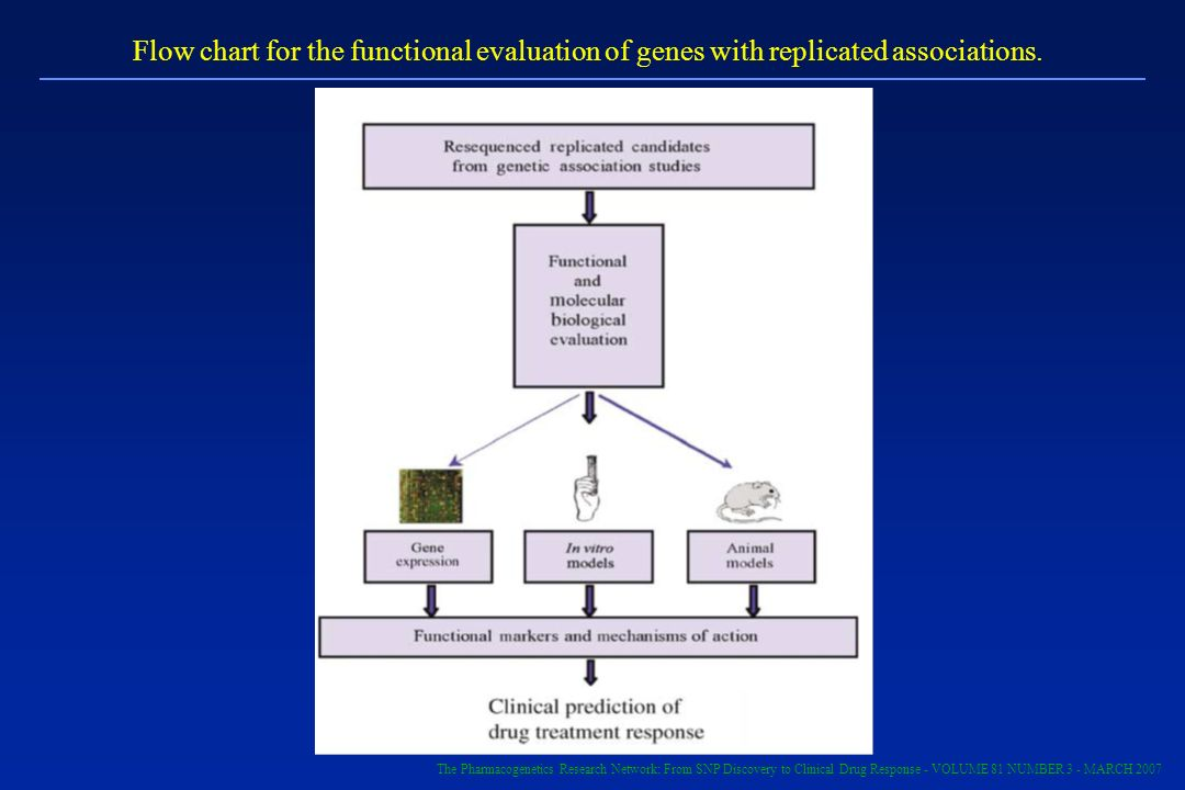 Flow chart for the functional evaluation of genes with replicated associations.