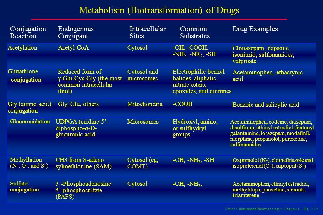 Metabolism (Biotransformation) of Drugs