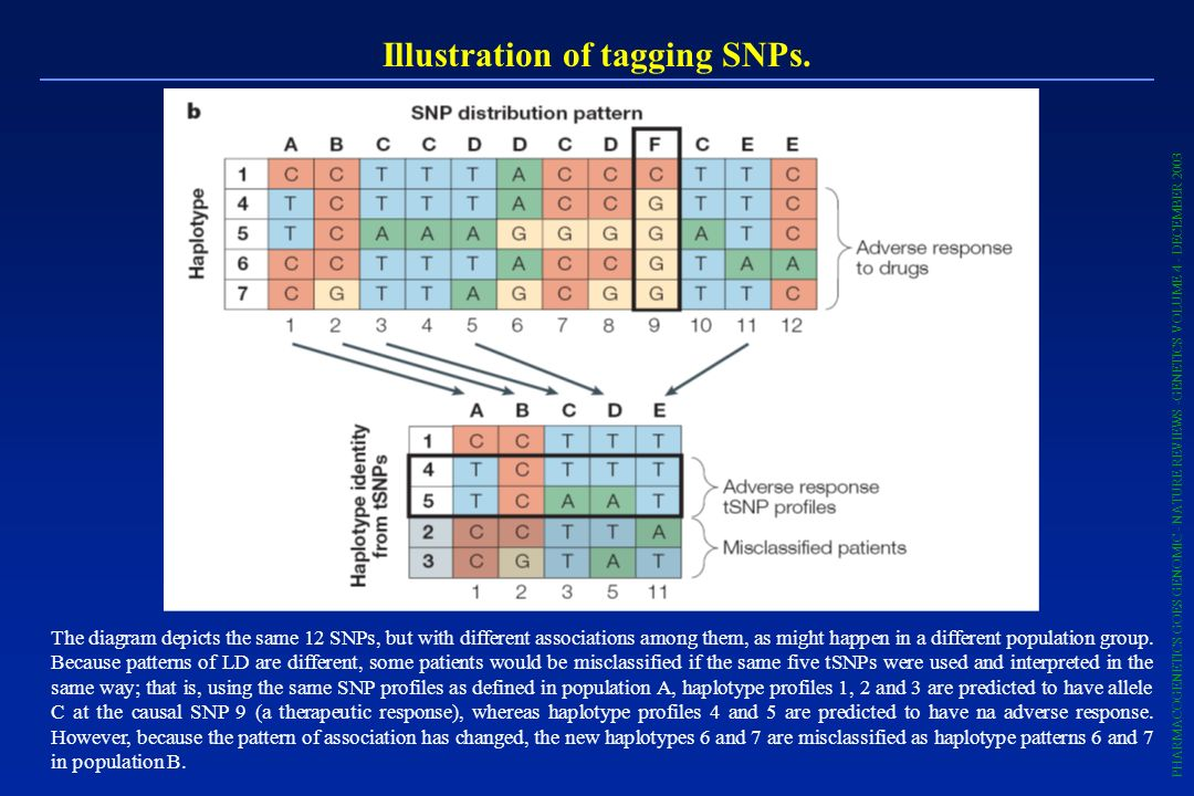 Illustration of tagging SNPs.