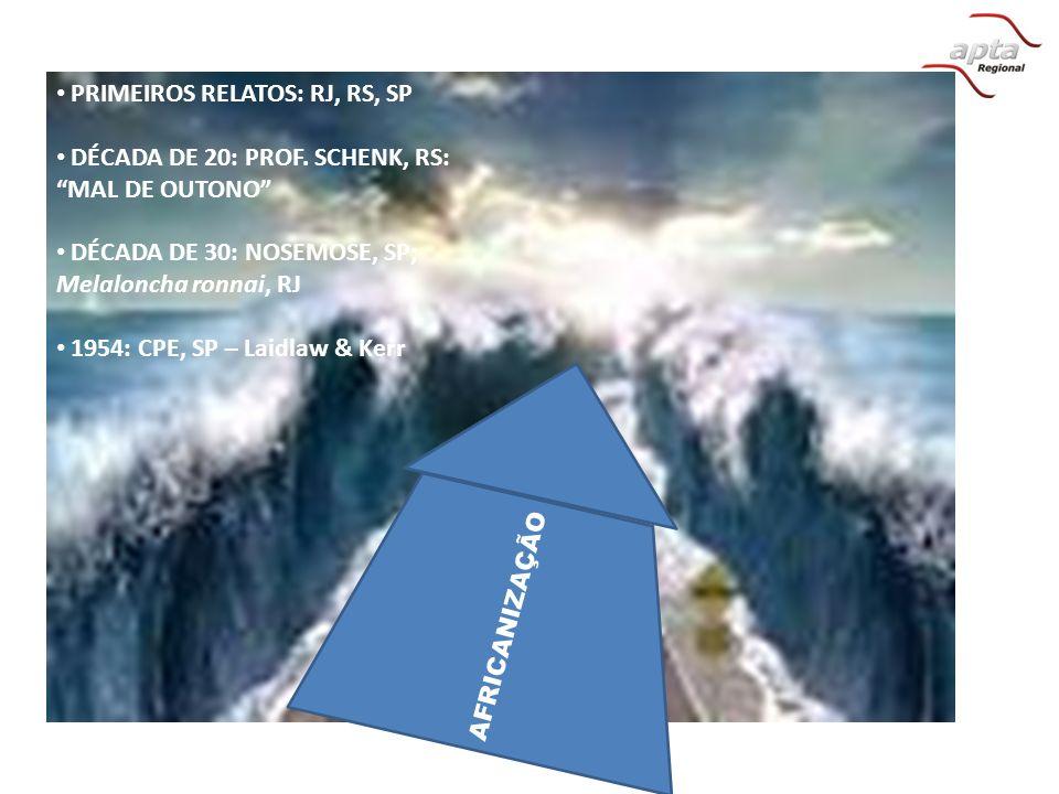 PRIMEIROS RELATOS: RJ, RS, SP DÉCADA DE 20: PROF. SCHENK, RS: