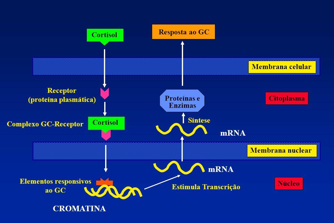 (proteína plasmática) Elementos responsivos ao GC