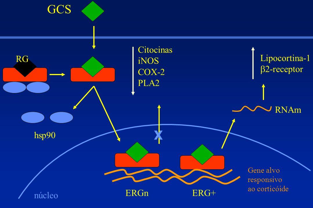 GCS X Citocinas iNOS COX-2 PLA2 RG Lipocortina-1 b2-receptor RNAm