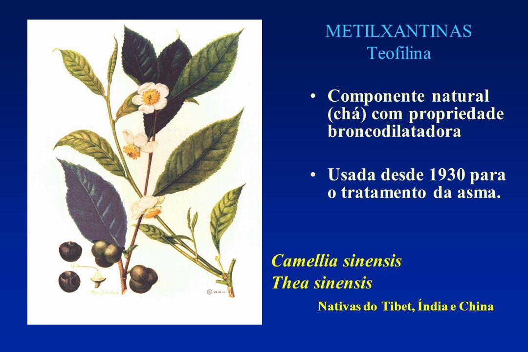 METILXANTINAS Teofilina